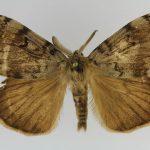 Le papillon mâle / Vitaman