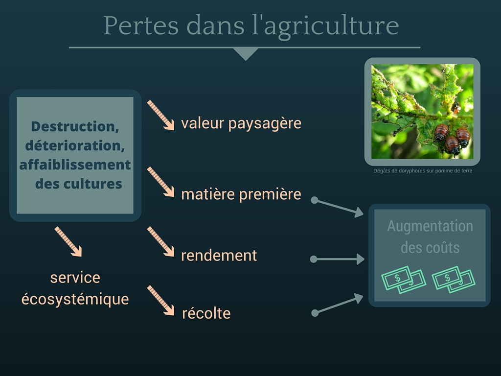 Impact_Agriculture