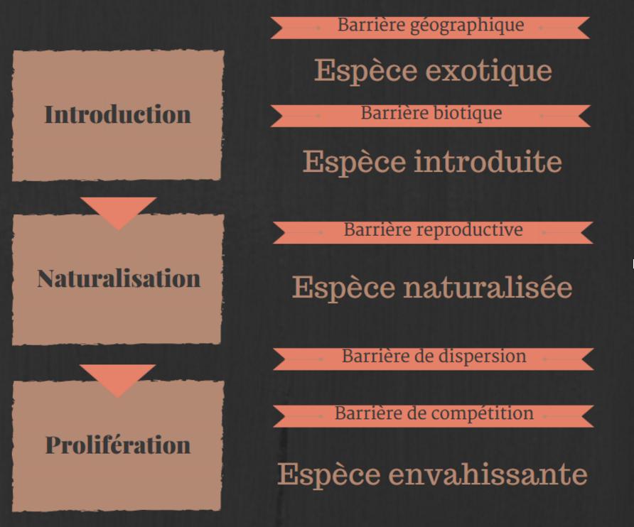 Infographie Fr