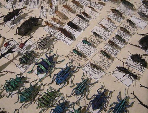Histoire des insectes