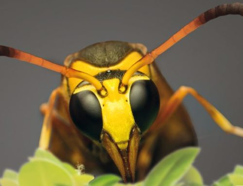 Insect invasion in a warmer World – Video