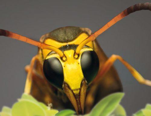Prévoir l'invasion des insectes